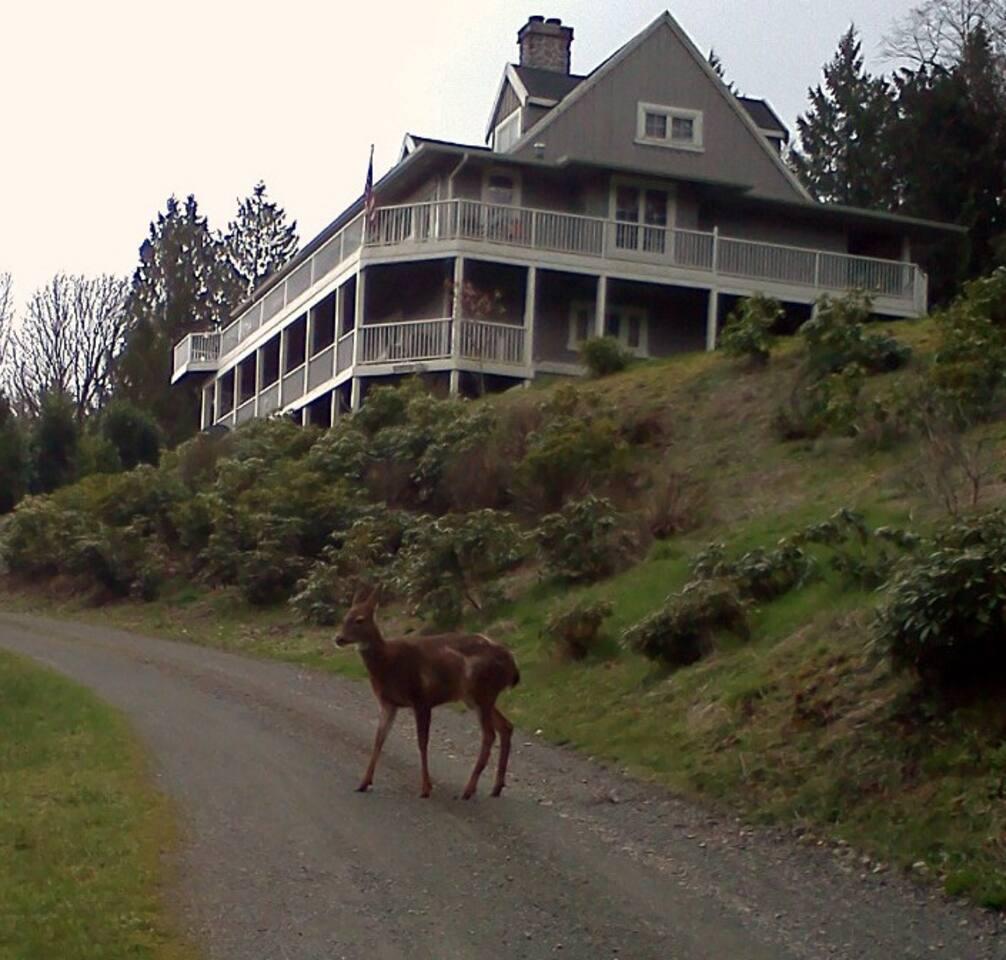 Deer, we get plenty of them.
