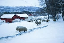My sheep in Winter photo Manon