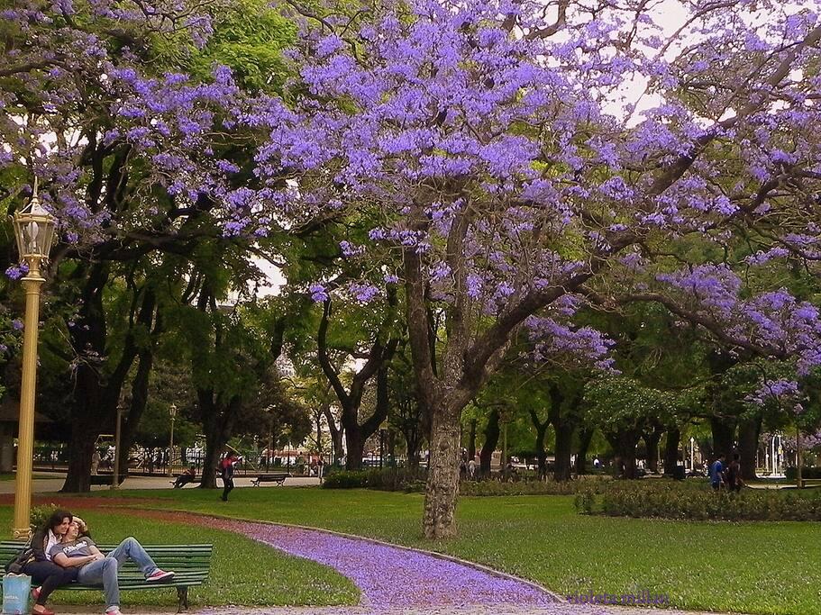 A solo 50 metros está la Plaza San Martín. Así se ve en primavera. Para nosotros, es la plaza mas linda de Buenos Aires!!
