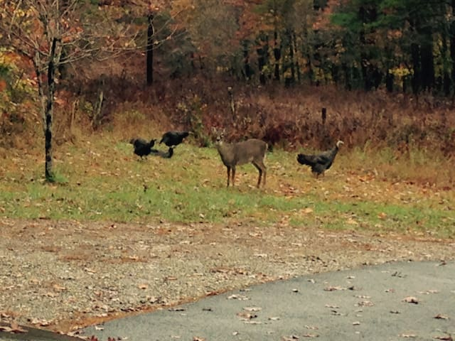 Deer and Turkeys having breakfast out front. Show up most days, can't guarantee that they will cooperate.