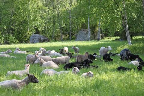 Farm accomodation on a sheep farm