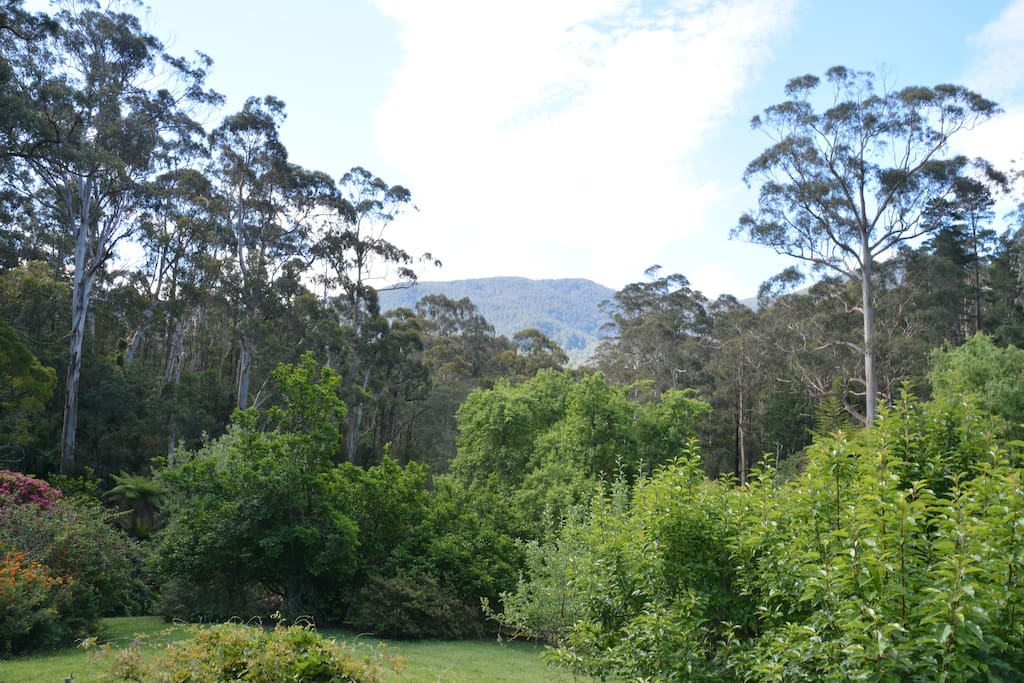 View of Mt. Donna Buang from the living room, main bedroom and deck.