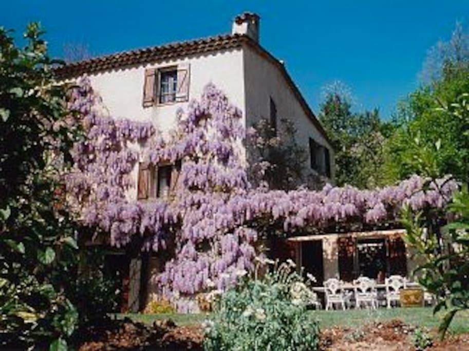 Beautiful wisteria covered house