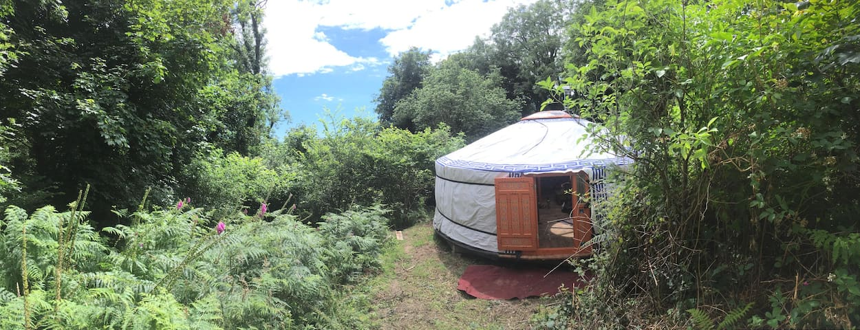 Yurt in the woods in the South Hams - Totnes - Yurt
