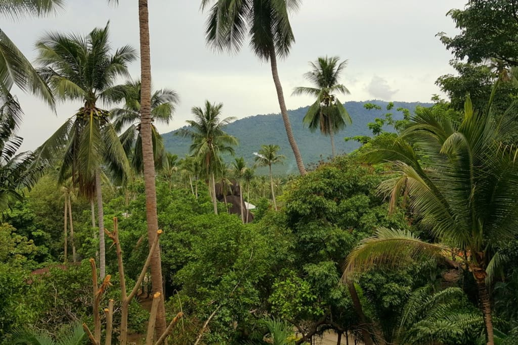 View on the tropical paradise