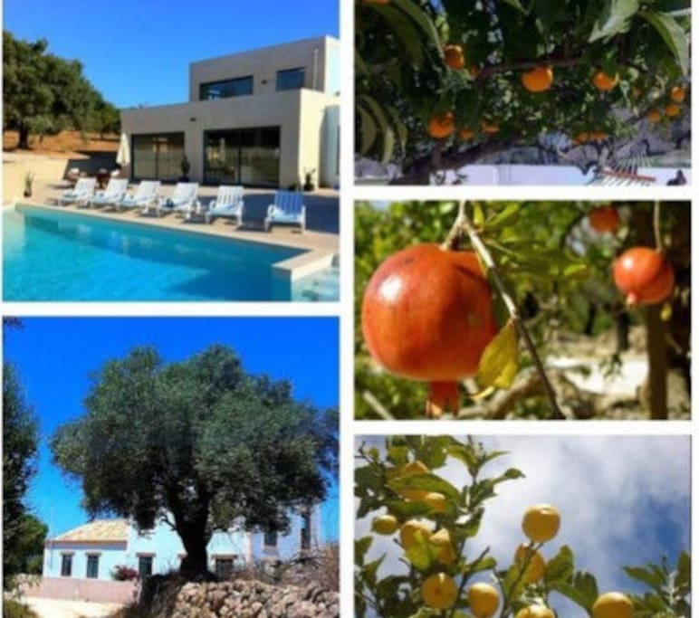 Lovely fruit trees  Help yourself to lemons , tangerines, figs, pomegranates and almonds