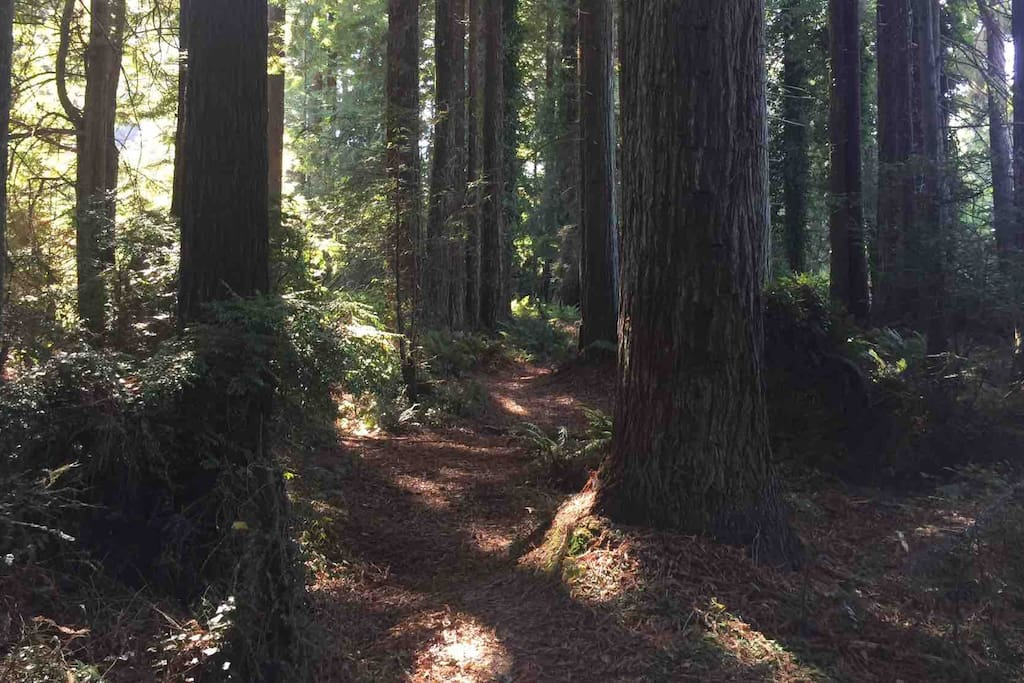 There are plenty of easy access trails through the redwood forest across the street to enjoy. Bring your coffee and go for a stroll to start your morning.