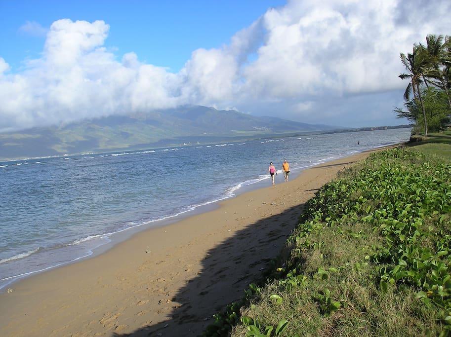 Sandy beach where Turtles are often seen