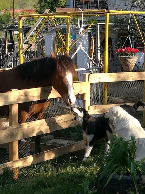 HAPPY TRAILS horse/ pony riding/ lodging SPECIAL