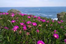 Paseo entre la playa Rapadoira y Llas.