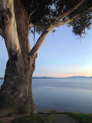 Beautiful lake Taupo (photo not from property)