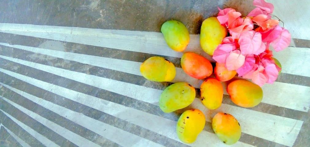 Mango season !