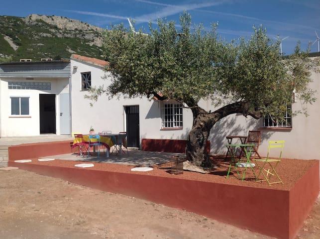 Grande Finca traditionnelle dans superbe oliveraie