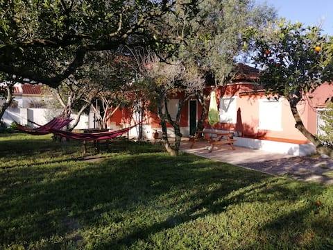 house of orange trees
