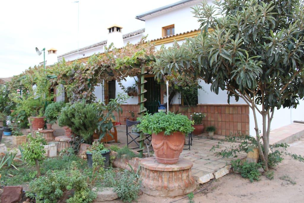 Una terraza con parra que da sombra en verano