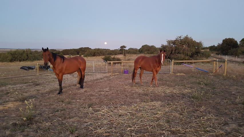 Nilgen horse camp