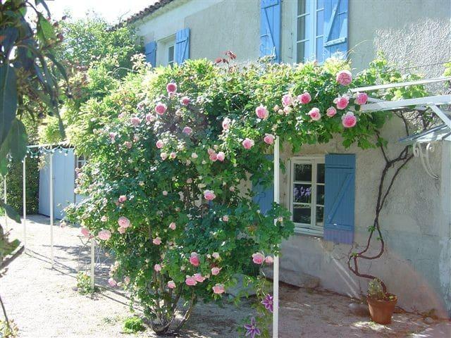 Maison de charme sur un jardin arboré - Valréas