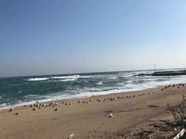 4호# 속초 바다앞 게스트하우스, 간단한 조식제공, 바베큐가능