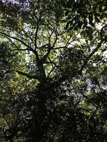 Descanso del bosque