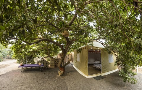 Tent amidst the orchard