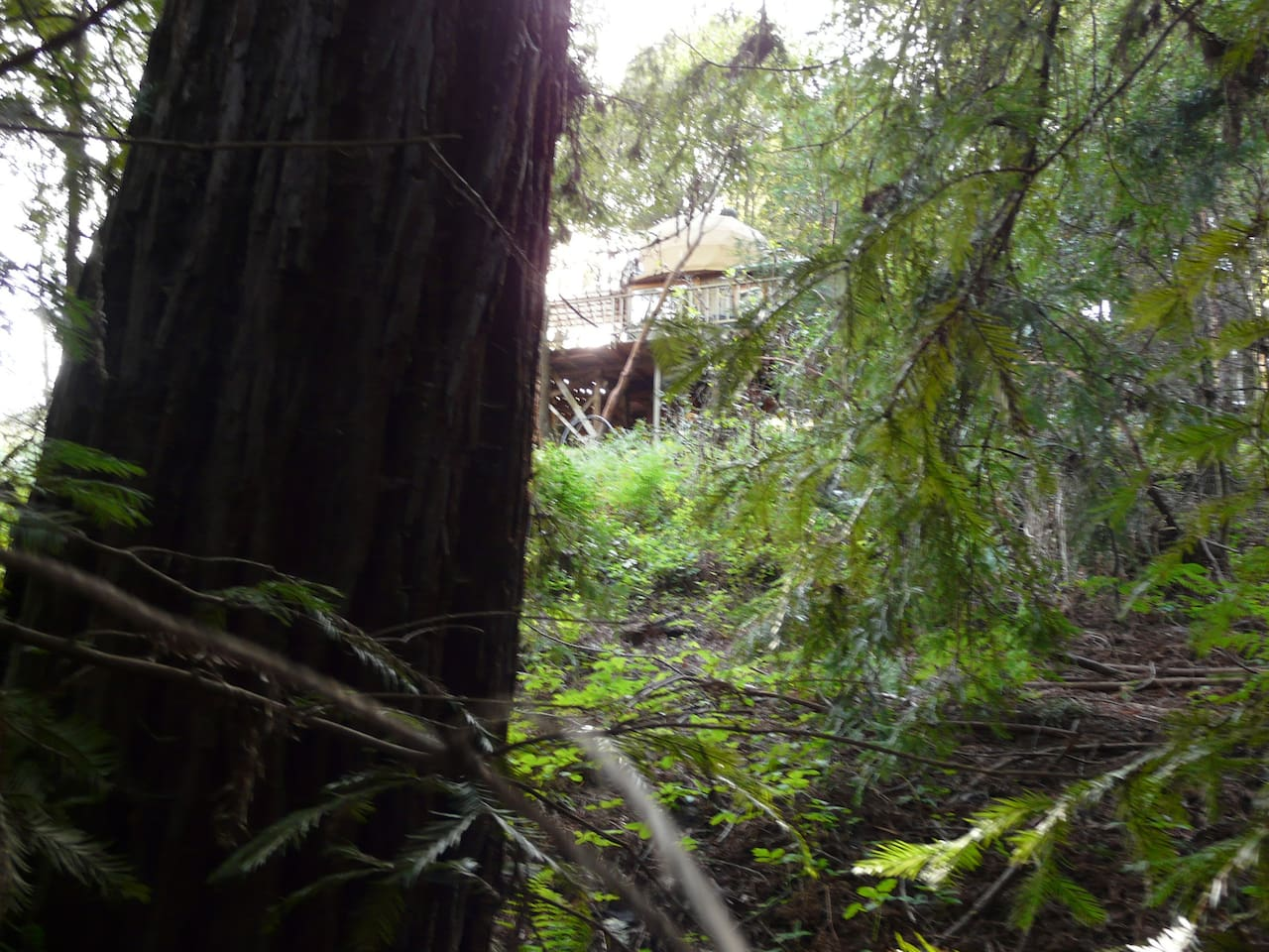 Looking up at the cabin from the Redwood Grove.