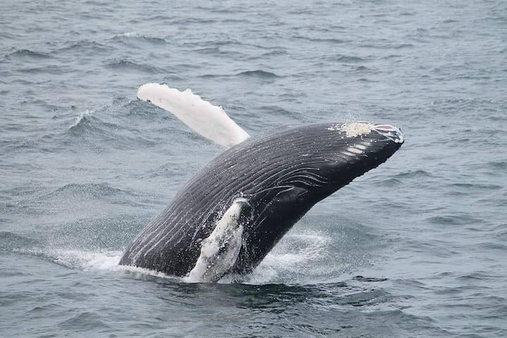 Humpback, Finback, and Minke Whales as well as porpoises, seals, and sharks have been seen offshore!