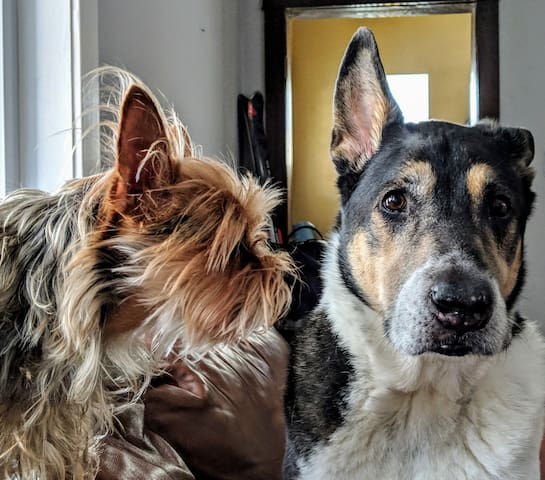Our furry friends, Max and Allie live here and they occasionally bark during the day. We take them upstairs with us at night.