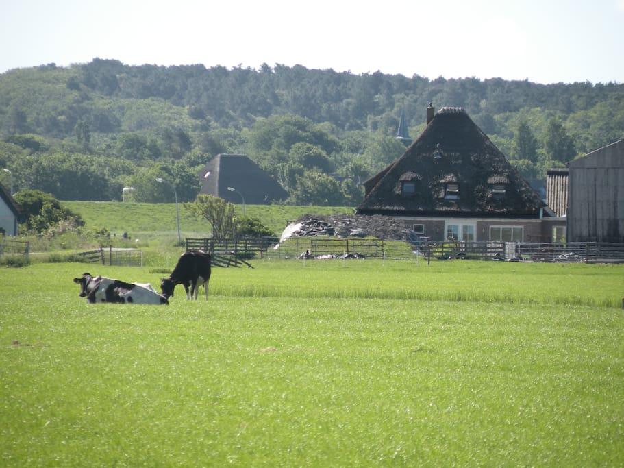 Onze boerderij 'Camperhoeve'