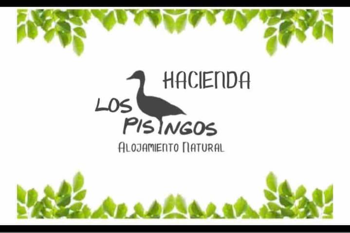 Mompox finca Los Pisingos.