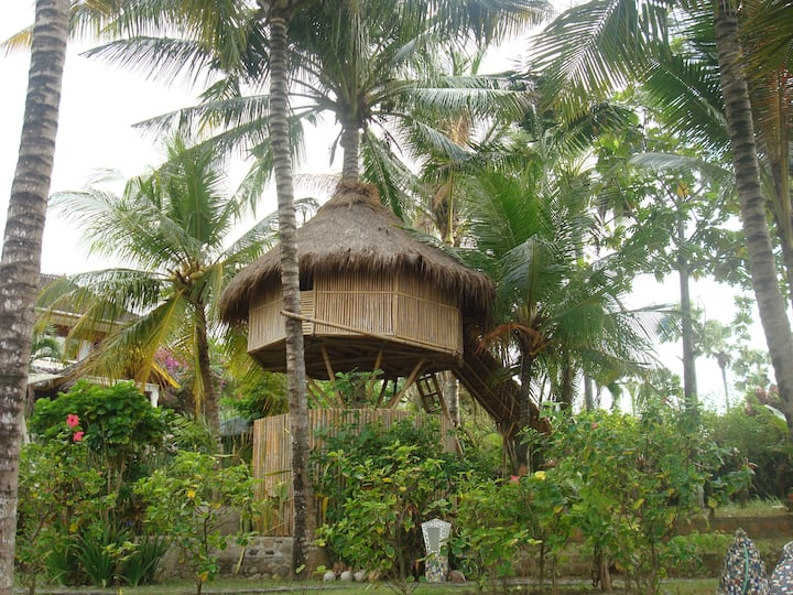 The Romantic Coconut Tree Hut is an eye opener