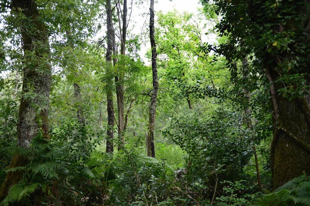 Le calme de la forêt sans être isolé :)