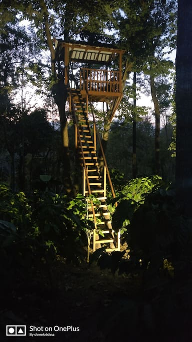 tree observatory under lights