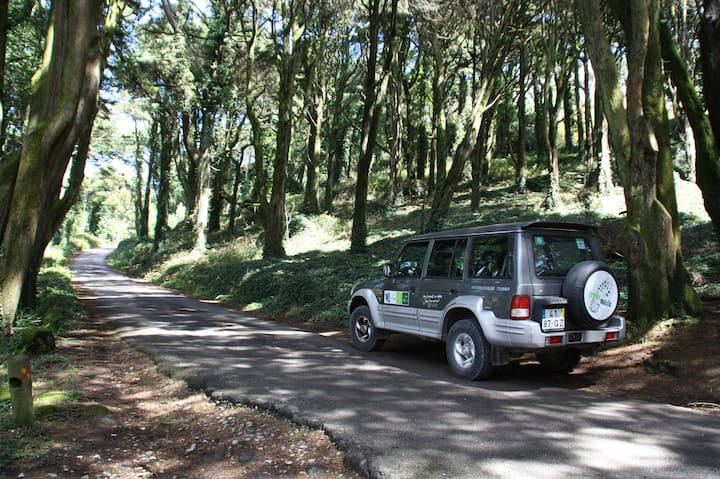 This is the luxuriant forest in Sintra
