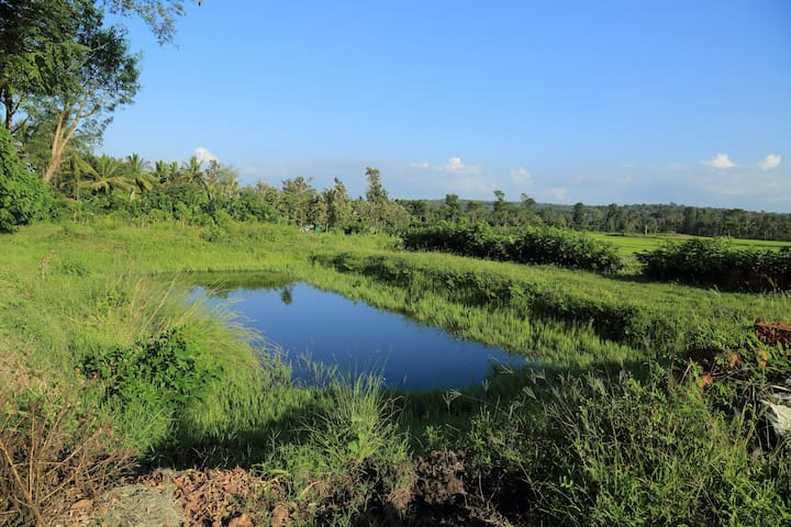 A pond in the plantation