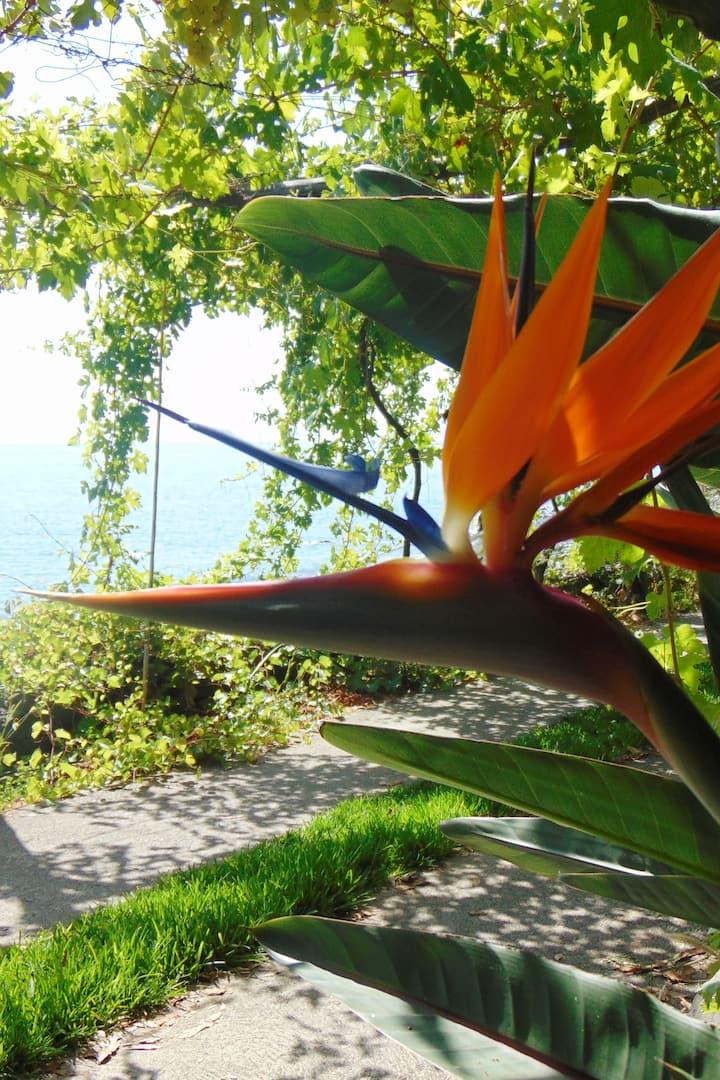 Estrelícia, a flor adoptada pela Madeira