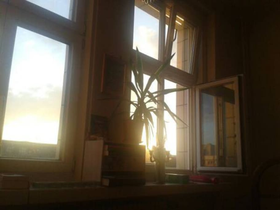 the windows of the living room go southwards