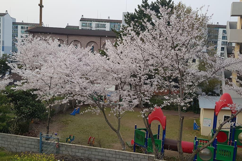집주변이 서울 삼청동 성북동처럼 세련되고 조용합니다 주변이 매우 쾌적합니다 노형동 최고 입지 그러나 자연이 같이 공존