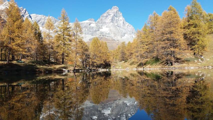 Quiet pine forest with Matterhorn view