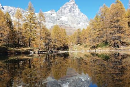 Quiet pine forest with Matterhorn view