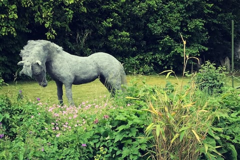 Our horse!