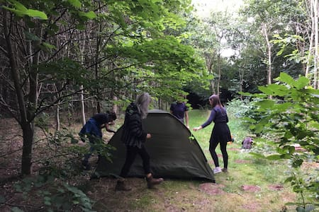 Camp in the woodland. Experience the outdoors!