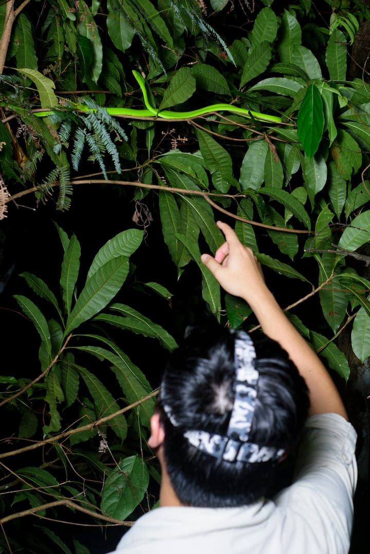 Showing an Oriental Vine Snake guests