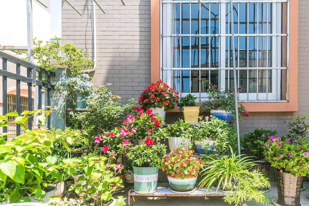 院子里的一角,各种花