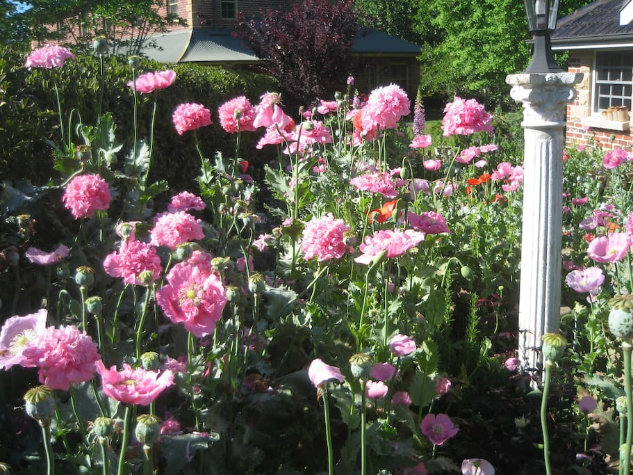 profusion of colour at the cottage