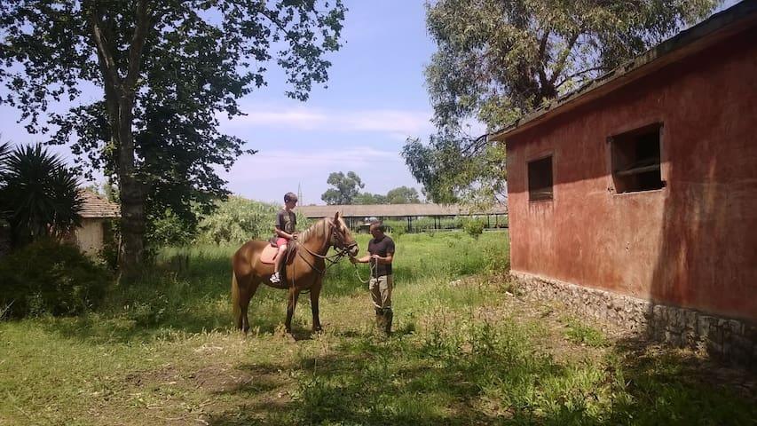 Atmosfera senza tempo in antica azienda agricola - Pontinia - Diğer