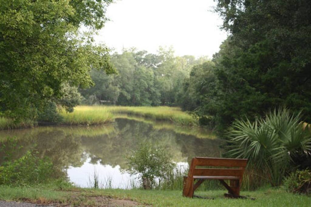 Backyard tidal creek is so peaceful and full of birds..