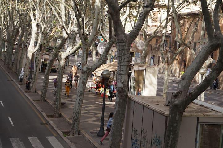 Habitación en el centro: La Rambla - Palma - Apartament