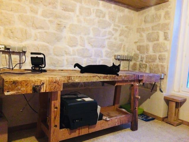 corner workshop before the invasion - cat posing