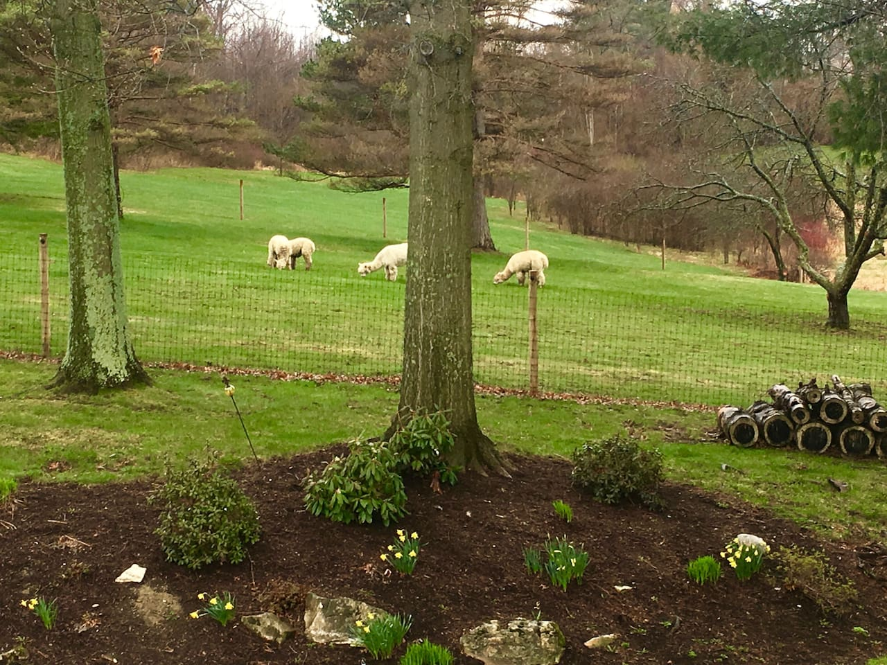 View from sitting room, home of Colonial Alpacas.
