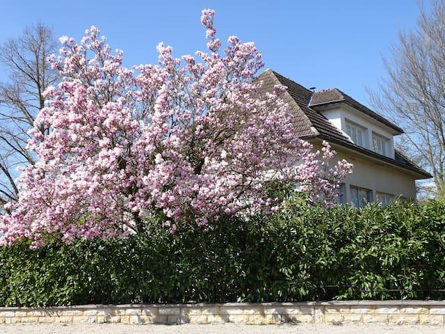 Au Magnolia